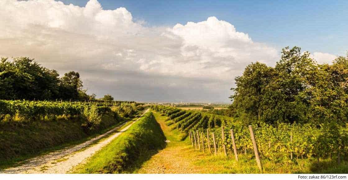 Weinprobe naturwein