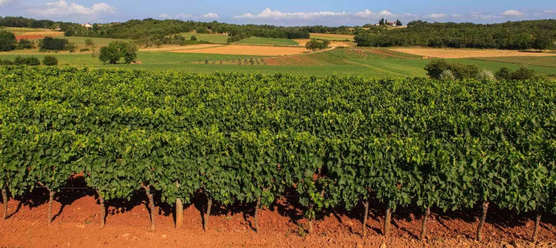 Weinprobe am 29. März - Mehr lecker Landwein!